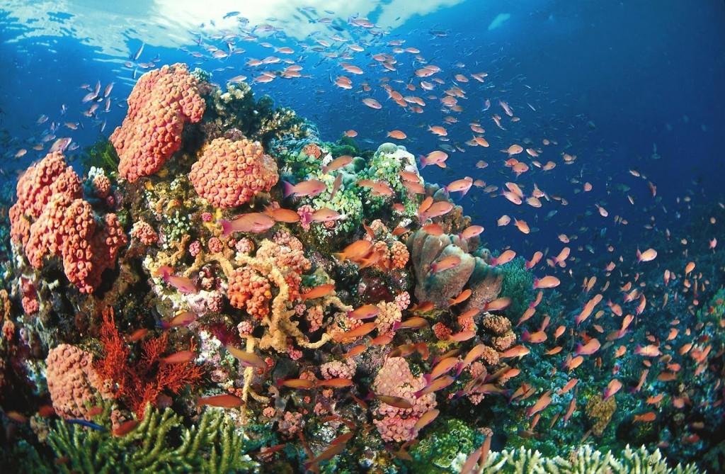 corals-marine-life